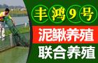泥鳅养殖免费指导